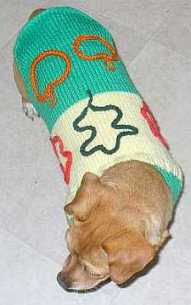 A Chiweening wearing a knitted dog sweater.