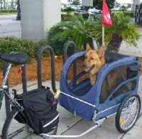 Comet's first ride in the Solvit Houndabout bike trailer
