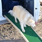 DIY folding do ramp being used by a grand pyrenees
