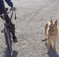 Bicycle exercise for dogs.