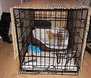 A dog crate with a cover over it, creating a den like experience.
