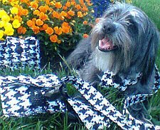 Houndstooth fabric can be used to make dog accessories