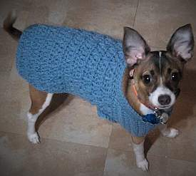 Axel, the Fox Terrier, sports this lovely sweater crocheted from our pattern instructions