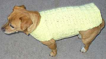 Pebble the dogs yellow crocheted sweater