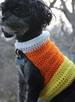Candy corn themed crocheted sweater for dog