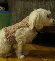 Crocheted dog sweater.