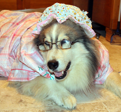Grandma costume from Little Red Riding Hood for dog.