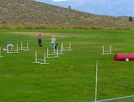 Dog exercise at a agility course