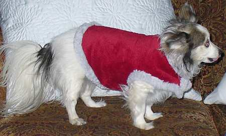 Dog wearing fleece coat