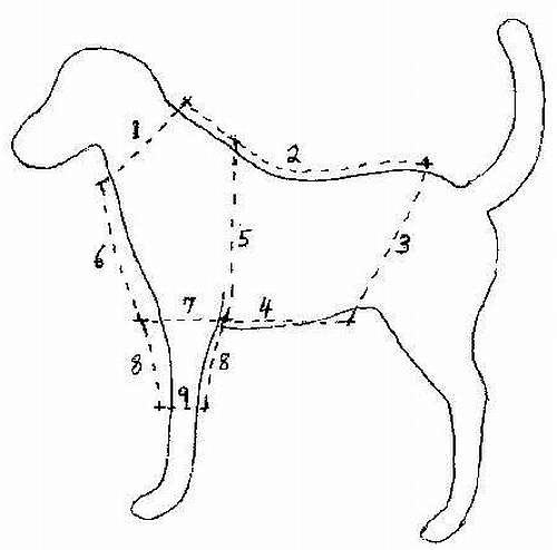 dog clothes pattern