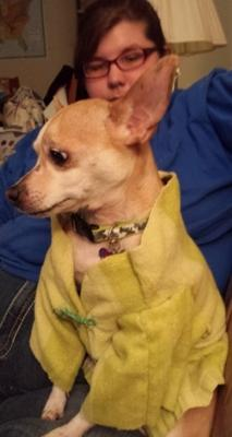 A picture of a dog in a homemade bathrobe sitting on it's owners lap