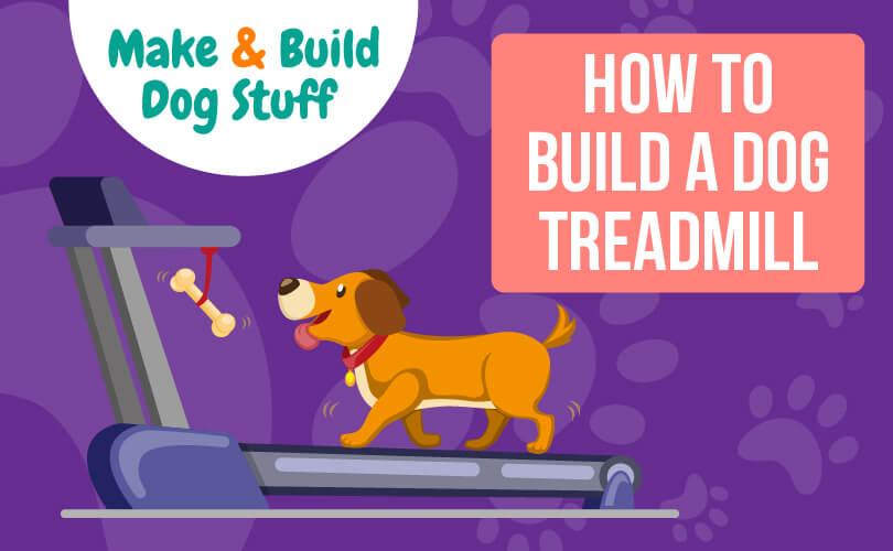 An animated picture of a dog on a treadmill with a bone hanging from the front of the treadmill to keep him motivated. Text reads how to build a dog treadmill.