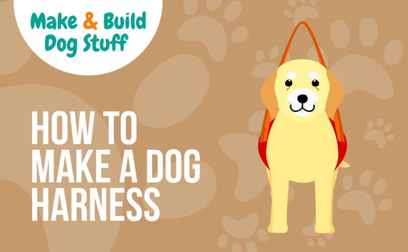 An animated picture of a yellow lab in a harness. Text reads how to make a dog harness.