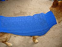 A blue knitted dog sweater