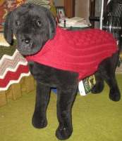 A dog wearing a red sweater.