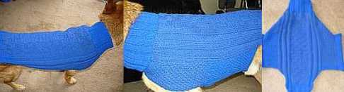 A picture of Comet in his knitted sweater.