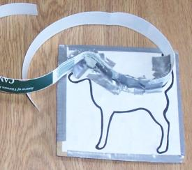 Starting to make a dog cookie cutter by taping a strip to a template
