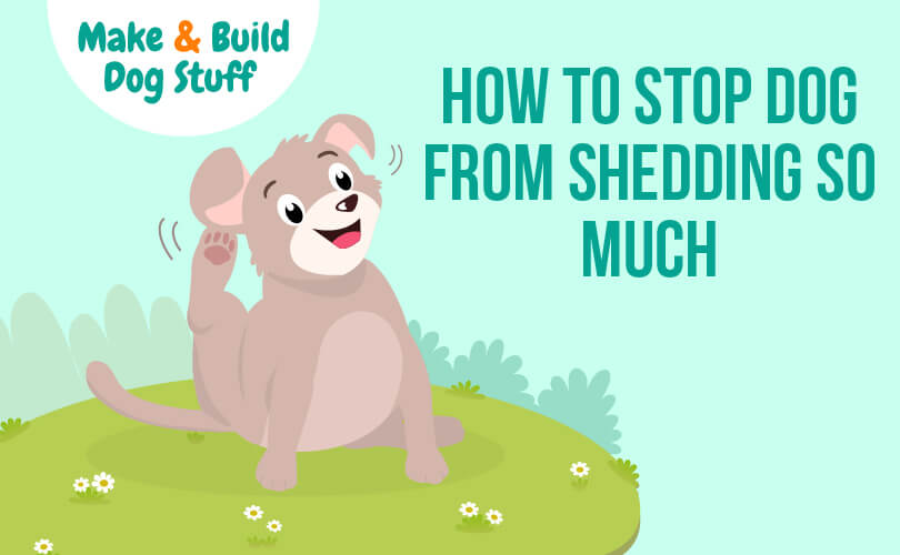 How to keep a dog from shedding so much